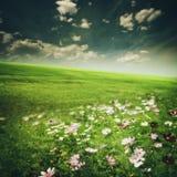 Prado da beleza com flores e grama verde Fotos de Stock Royalty Free