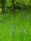 Prado da flor Imagens de Stock Royalty Free