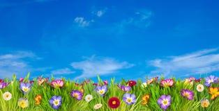 Prado da flor da mola Foto de Stock Royalty Free