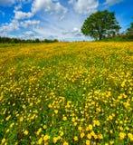Prado da flor da primavera Foto de Stock