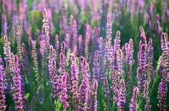 Prado da flor na primavera imagens de stock