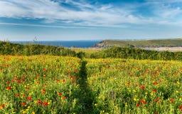 Prado da flor selvagem Fotos de Stock