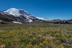 Prado da flor selvagem abaixo do Monte Rainier fotografia de stock