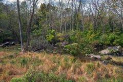 Prado da floresta fotografia de stock royalty free