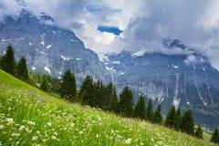 Prado da grama e dos wildflowers Foto de Stock Royalty Free