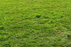 Prado da grama verde no sol Fotografia de Stock Royalty Free