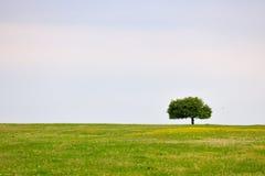 Prado da mola com árvore Imagens de Stock Royalty Free