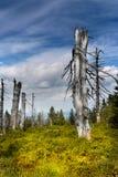 Prado da montanha, árvores inoperantes secas imagens de stock royalty free