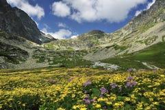 Prado da montanha Imagens de Stock