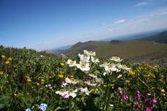 Prado da montanha Imagem de Stock