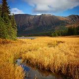 Prado da montanha Imagem de Stock Royalty Free