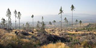 Prado da montanha com árvores Foto de Stock Royalty Free