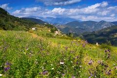 Prado da montanha com flores Fotos de Stock