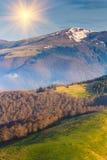 Prado da montanha na floresta Imagens de Stock Royalty Free