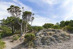 Prado da montanha nas montanhas caucasianos Foto de Stock