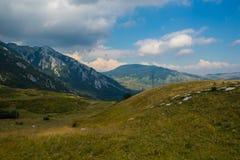 Prado da montanha no verão Fotos de Stock Royalty Free
