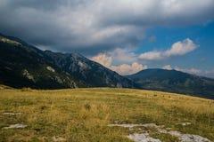 Prado da montanha no verão Imagem de Stock