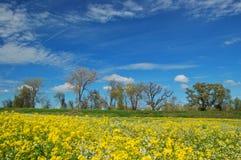 Prado da primavera Foto de Stock