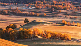 Prado de Bashang en el otoño Foto de archivo libre de regalías