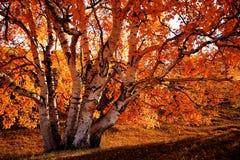 Prado de Bashang en el otoño Fotos de archivo libres de regalías