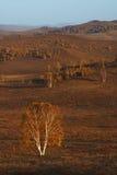 Prado de Bashang en Inter-Mongolia de China Foto de archivo libre de regalías
