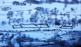 Prado de Bashang en invierno Imágenes de archivo libres de regalías
