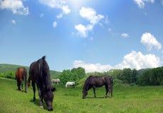 Prado de caballos Imagen de archivo