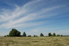 Prado de feno com árvores fotografia de stock