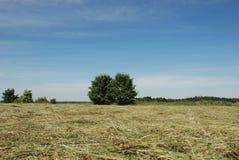 Prado de feno com árvores foto de stock royalty free