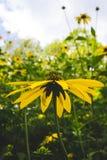 Prado de flores Fotografía de archivo