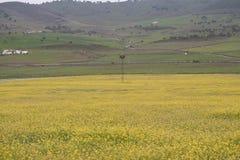Prado de flores amarelas Foto de Stock