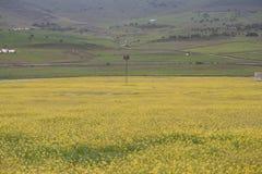 Prado de flores amarelas Fotografia de Stock