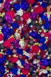 Prado de flores coloridas fotografía de archivo libre de regalías