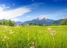 Prado de florescência com Watzmann nevado Fotografia de Stock