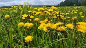 Prado de florescência do verão imagens de stock