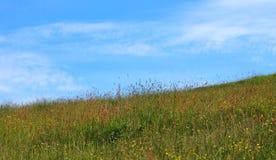 Prado de heno brillante del comienzo del verano con las hierbas y los wildflowers naturales altos en una mañana soleada brillante fotos de archivo