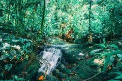 Prado de la corriente en selva tropical verde foto de archivo
