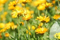 Prado de la flor Fotografía de archivo libre de regalías