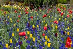 Prado de la flor de la primavera Fotografía de archivo