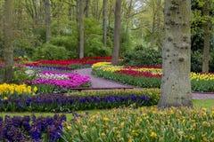 Prado de la flor de la primavera Foto de archivo libre de regalías