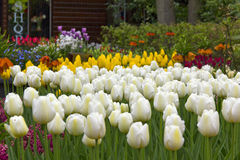 Prado de la flor de la primavera Imagen de archivo libre de regalías