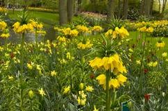 Prado de la flor de la primavera Imágenes de archivo libres de regalías