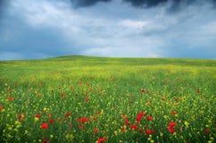 Prado de la flor de la primavera Fotos de archivo