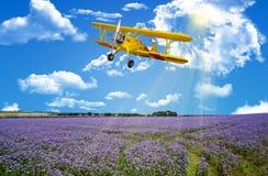 Prado de la flor del cielo azul Foto de archivo