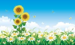 Prado de la flor del verano stock de ilustración