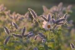 Prado de la flor en los brillos del amanecer imágenes de archivo libres de regalías