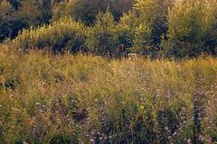 Prado de la flor en puesta del sol Fotografía de archivo