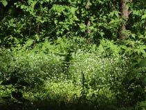 Prado de la flor en un bosque de la primavera Fotos de archivo