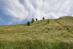 Prado de la hierba Fotografía de archivo libre de regalías