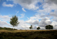 Prado de la hierba del día soleado del verano con los árboles de abedul amarillo Fotos de archivo